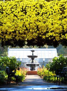 Bellingrath Gardens Mobile Alabama | The Mums of Bellingrath Gardens | al.com