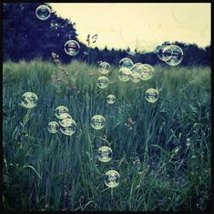 rainbow bubbles floating in front of a grainfield  #rainbowbubbles