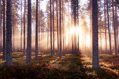 The Enchanted Forest – Gratis bezorgd fotobehang van de hoogste kwaliteit – Photowall Custom Wallpaper, Photo Wallpaper, Enchanted, Jonna Jinton, Visit Sweden, Forest Wallpaper, Magical Forest, Textured Wallpaper, Decoration