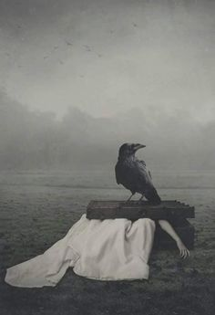 Ravenna, The Other Side, Bald Eagle, Crow, Whale, Photography, Animals, Darkness, Paintings