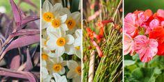 🌹🌻🍀💐 Αγαπημένα λουλούδια από τις αυλές των γιαγιάδων μας, διαχρονικά φυτά με άρωμα μιας άλλης εποχής! Είναι καιρός να τα φυτέψουμε και να ξαναζήσουμε όλες τις όμορφες στιγμές μέσα από τα άνθη και τα αρώματα των φυτών που όλοι αγαπήσαμε.