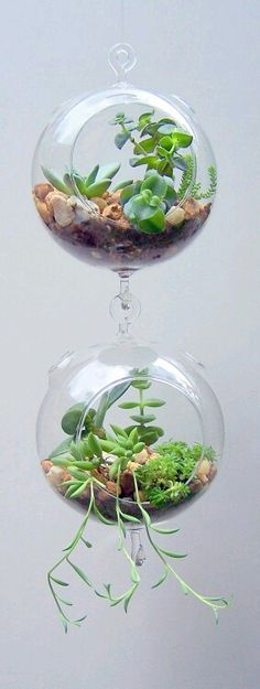 Pela vidraça