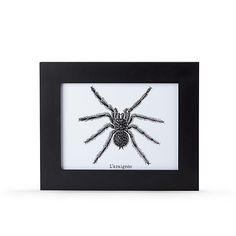 Spider Image encadrée 26x32cm : l'araignée