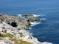 Newfoundland Newfoundland, Landscapes, Eyes, Water, Outdoor, Paisajes, Gripe Water, Outdoors, Scenery