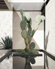 Los cactus están de moda, yo tengo dos, me encantan por ese color verde tan intenso. Quedan perfectos en cualquier estancia y en el exterior, mis lugares preferidos son en la cocina o el baño. Pazugena.com