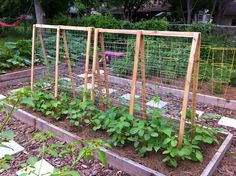 25 Eye-Catching DIY Trellis Ideas For Your Garden A garden trellis is an excellent way to support plants and flowers while adding structure and decorative flair to your landscape. Bean Trellis, Tomato Trellis, Cucumber Trellis, Diy Trellis, Garden Trellis, Trellis Ideas, Pole Beans Trellis, Arch Trellis, Trellis Design