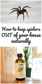 to keep spiders out of your house (naturally) How to keep spiders out of your house naturally. 8 tips and tricks to stay spider free this fall!How to keep spiders out of your house naturally. 8 tips and tricks to stay spider free this fall! House Cleaning Tips, Green Cleaning, Cleaning Hacks, Spring Cleaning, Natural Cleaning Recipes, Natural Cleaning Products, Natural Products, Tips And Tricks, Get Rid Of Spiders