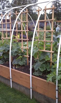 Raised beds are a popular way to grow vegetables, and there are all kinds of styles. This raised bed is really done nicely. It can be covered as seasons change by spreading bird netting or greenhouse plastic over the pvc arches, plus tall plants can be grown on the trelises.  Click on the link and take the time to read the comments. (No plans given, but the picture seems easy to figure out.)