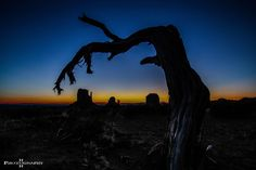 """""""Dead can't dance"""" ... legendary dead tree at Monument Valley, UT"""