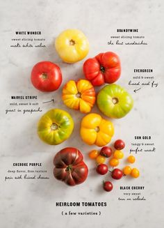 Gardening Tomatos Ideas for serving and cooking with the many types of heirloom tomatoes. - Ideas for serving and cooking with the many types of heirloom tomatoes. Heirloom Tomatoes, Cherry Tomatoes, Tomato Garden, Tomato Planter, Tomato Trellis, Growing Tomatoes, Freezing Tomatoes, Dried Tomatoes, Gastronomia