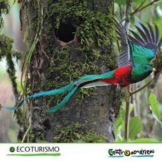 Te animamos a realizar un acercamiento natural en una frondosa vegetación donde la flora y la fauna forman parte intrínseca del medio.