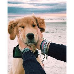 """Learn more relevant information on """"golden retriever dogs"""". Look at our web site. Cute Baby Animals, Animals And Pets, Funny Animals, Funny Dogs, Cute Dogs And Puppies, I Love Dogs, Doggies, Cute Pets, Baby Puppies"""