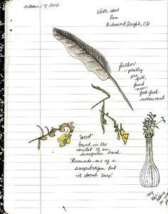 North Laurel Home & School: Nature Journal