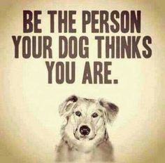 Monday wisdom from our canine companions: Be the person your dog thinks you are. My dog thinks I'm incredibly lovable, strong, capable, and awesome. and today I'm making a point to believe her. ❤️ Who does your dog think you are? Animal Quotes, Dog Quotes, Life Quotes, Dog Sayings, Animal Posters, Great Quotes, Quotes To Live By, Inspirational Quotes, Motivational
