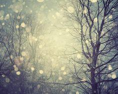 Snow bokeh bokeh outdoors winter trees snow