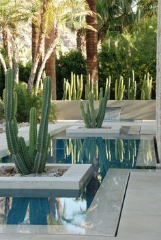 jardin paysager, bassin et plantes