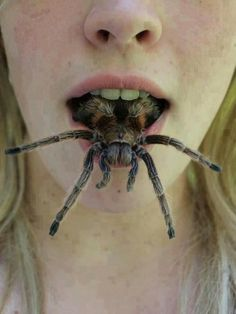 scary spider images, image search, & inspiration to browse every day. Common Phobias, Oh Hell No, Big Spiders, Voodoo, Funny Pictures, Funny Pics, Hilarious, Creatures, Fandom
