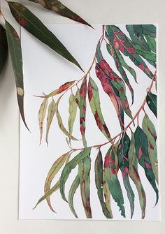 Australian Eucalyptus leaves - bold & beautiful print of the original watercolour painting by Zoya Makarova Watercolor Walls, Watercolor Flowers, Watercolor Paintings, Gouache Painting, Watercolor Portraits, Watercolours, Plant Sketches, Flower Sketches, Botanical Drawings