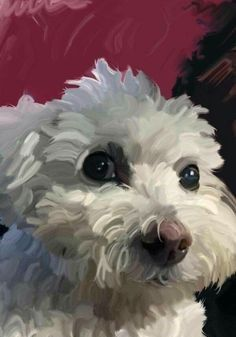 Frise Art, I Love Dogs, Cute Dogs, Puppy Play, Rare Animals, Dog Memorial, Dog Paintings, Watercolor Animals, Pet Memorials
