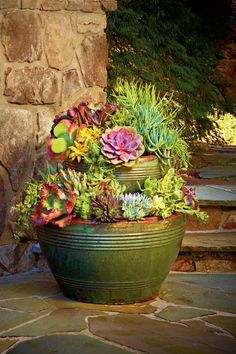 121 Container Gardening Ideas Forgiving succulents are both heat and drought tolerant so they'll look great all summer long. Get the Planting Guide The post 121 Container Gardening Ideas appeared first on Garden Ideas. Succulent Gardening, Succulent Pots, Cacti And Succulents, Planting Succulents, Garden Pots, Organic Gardening, Gardening Tips, Planting Flowers, Garden Ideas