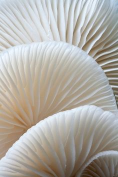 Mushroom upside down - Nature Porn - Mushroom upside down - Patterns In Nature, Textures Patterns, Photo Backgrounds, Art Texture, Line Texture, Paris In Autumn, Impression Textile, Beige Aesthetic, Aesthetic Bedroom