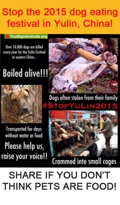 Stop the 2015 dog eating festival in Yulin, China! Sign the Petition…