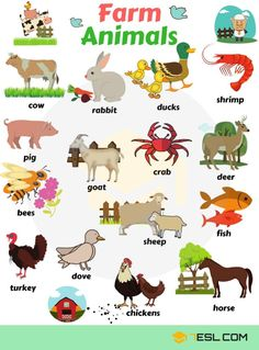 Farm and domestic animals vocabulary Farm Animals! List of domestic and farm animals with pictures in English. Learn these farm animals list with examples to improve your vocabulary words in E Learning English For Kids, English Lessons For Kids, Kids English, English Language Learning, Teaching English, English Vocabulary Words, Learn English Words, Farm Animals List, Animal List