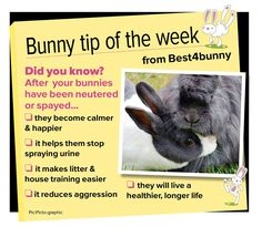 Bunny tip - week 32 So many benefits to having your bunnies neutered or spayed. I'm just apprehensive about the vets around here. Lana Banana, Bunny Care Tips, Baby Bunnies, Hunny Bunny, Bunny Toys, Rabbit Facts, Netherland Dwarf Bunny, Rabbit Behavior, Dwarf Bunnies