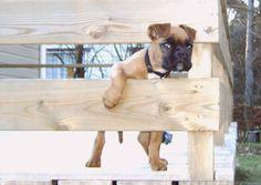 Nieuwsgierig Aagje, zo klein dat Tess bijna tussen de planken van de veranda door kan.