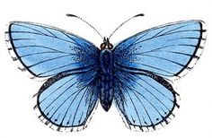 Free vintage blue butterfly image to download