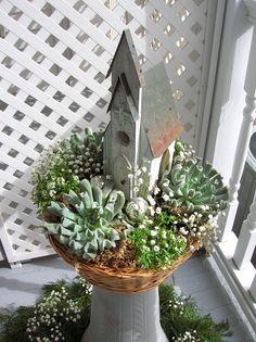 Succulents + birdhouse