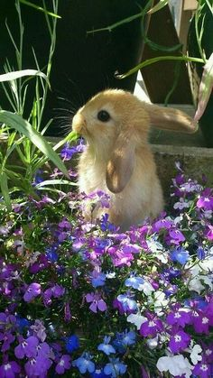 Bunny in spring flowers