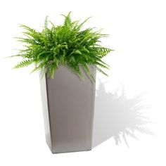 4e612023eb4 Amazon.com   Algreen 11204 Self Watering Square Modena Planter
