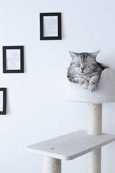 cat×interior
