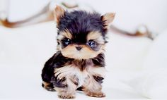 I'll be honest. This picture gives me more of a Toddlers-&-Tiaras vibe than the kind of cute I expect from a pup. What about for you? Would you want one of these? (via Happy Things...