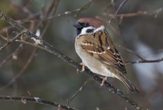 Pikkuvarpunen. Kuva: Petri Vainio Petra, Finland, Natural Beauty, Wildlife, Birds, Garden, Nature, Animals, You Are Awesome