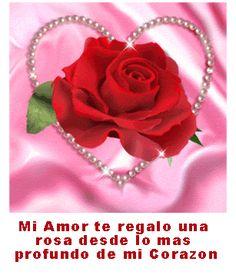 Mi Amor te regalo una rosa #amor #love #i_love_you #te_quiero #te_amo