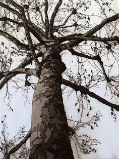 Chrissy Norman - Artist & Printmaker - Etchings of Suffolk - Trees