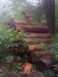 Wald Erkundung mit Hund und Hündin in Meerbusch Büderich im meererbuscher Wald (Meererbusch) - Sommer und Holz / Baumstümpfe
