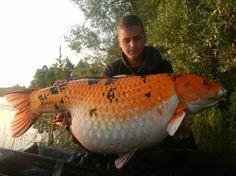 . Happy Fishing, Best Fishing, Carp Fishing Videos, Monster Fishing, Fishing Times, Cool Fish, Koi Carp, Fishing Knots, Angel Fish
