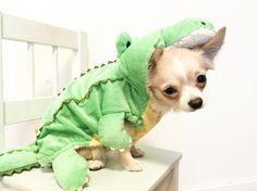 • Bailey in his crocodile costume #chihuahua #longhaired #dog #dogcostume