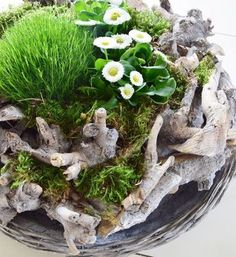 Frühlings-DIY! Ein toller Kranz aus Holz für euren Esszimmertisch, Wohnzimmertisch oder die Konsole. Einfach und schnell selbst gemacht. Mit Moos und Frühjahrsblühern! DIY-Frühling-Frühjahr-Bellis-Moos-kreation-selbsgemacht-selbermachen