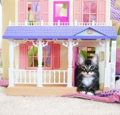 funny, funny pictures, funny photos, hilarious, funny cats, cat, 16 Cats Hanging Out in Dollhouses Like They Own It