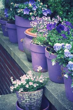 Nice idea to have pots the same color, the pot compliments the flower.