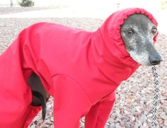 Custom Made Polartec Rain Suit for Italian greyhounds and small dogs-several colors - product images of