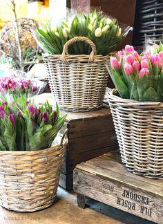 Winterschlaf, Ich bin ein Murmeltier, Tulpen, waseigenes.com