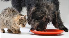 Warum Hunde alles fressen und Katzen wählerisch sind...