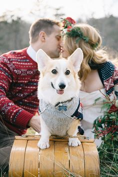 Adorable Corgi on a Vintage Wooden Sled | Nicole Colwell Photography | Festive Styled Wedding in the Winter Woods - with a Corgi in a Holiday Sweater!
