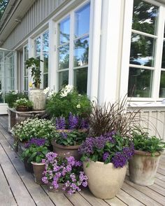 64 stunning front yard cottage garden inspiration ideas - Garden Care, Garden Design and Gardening Supplies Garden Cottage, Garden Pots, Garden Ideas, Potted Garden, Potted Plants Patio, Patio Ideas, Balcony Garden, Garden Front Of House, Garden Hammock
