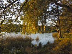 The lake in autumn light